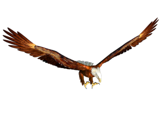 The Eagle in flight representing strength, agility and power.